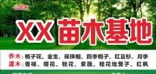 苗木广告图片