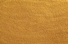 优质黄金小米图片