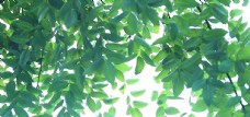 树叶 阳光 素材