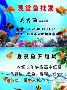 觀賞魚名片圖片