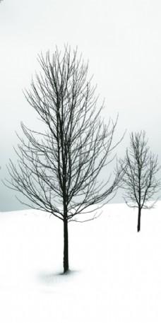 雪景枯树图片