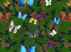 迷彩 蝴蝶图片